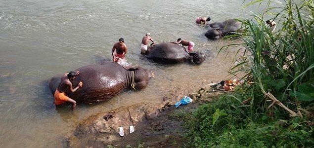 KODANAD ELEPHANT BATHING
