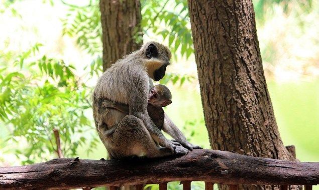 Aralam wild-life Sanctuary