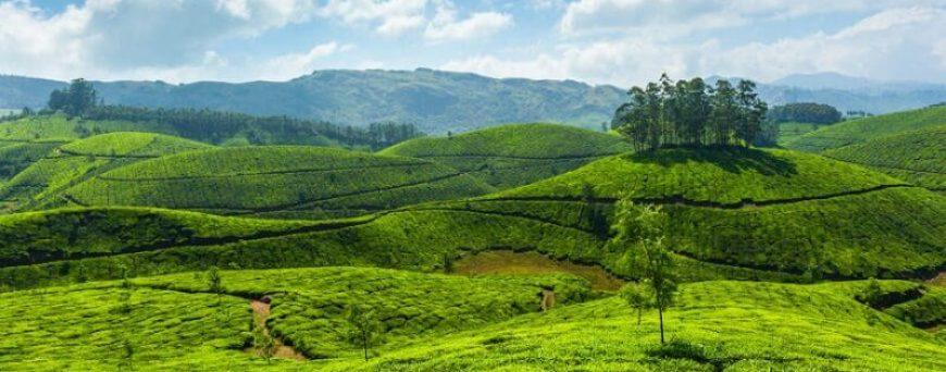 dating in Kottayam Kerala