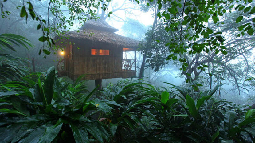 vanya Tree house in thekkady