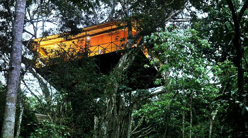 Vythiri-Resort-Honeymoon-Tree-House-Resort-in-Kerala