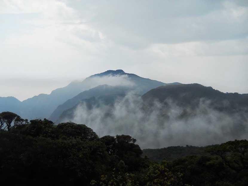 waynad hills in Kerala