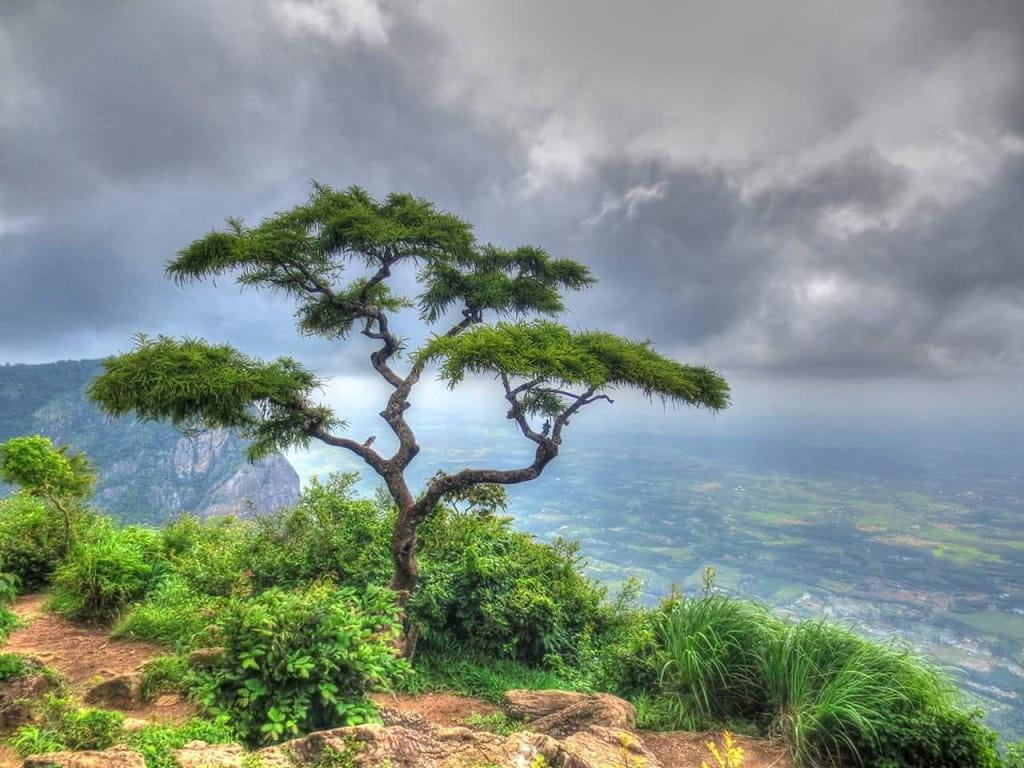Neliyampathy Hills