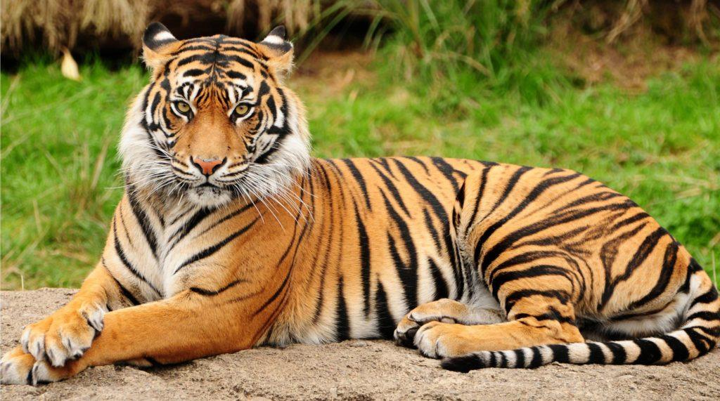 Parambikulam Wild Life Sanctuary Palakkad Kerala