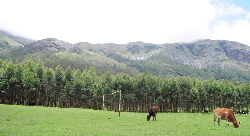 Silent Valley National Park Palakkad Kerala