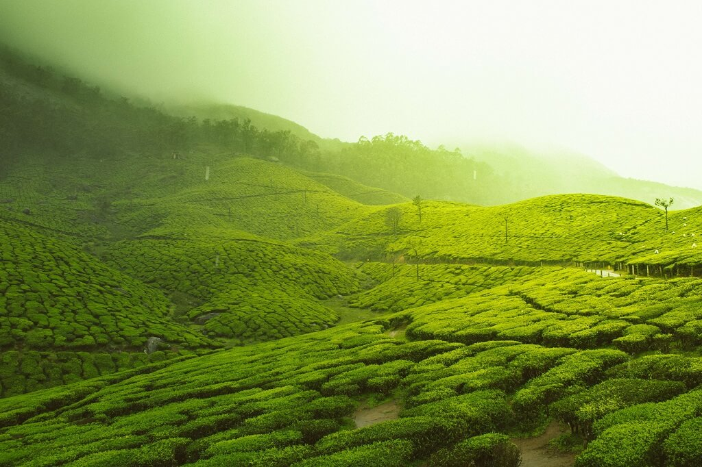 Best Hill Stations in Kerala