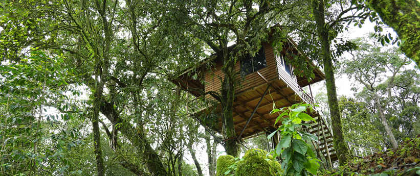 Tree house in Munnar