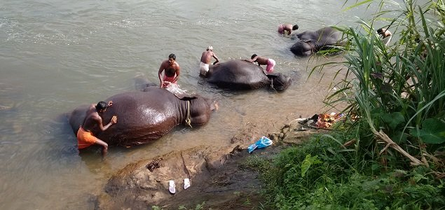 KODANAD ELEPHANT BATHING