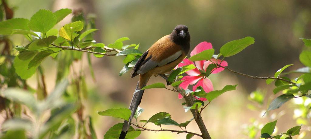 kerala bird sanctuary