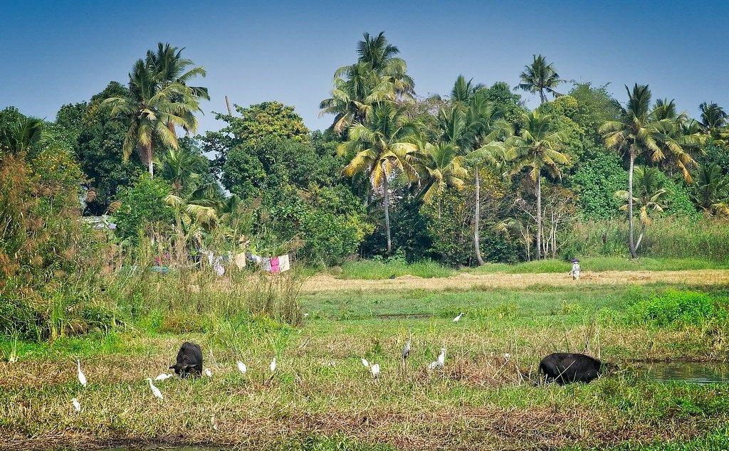 Kumarakom-village